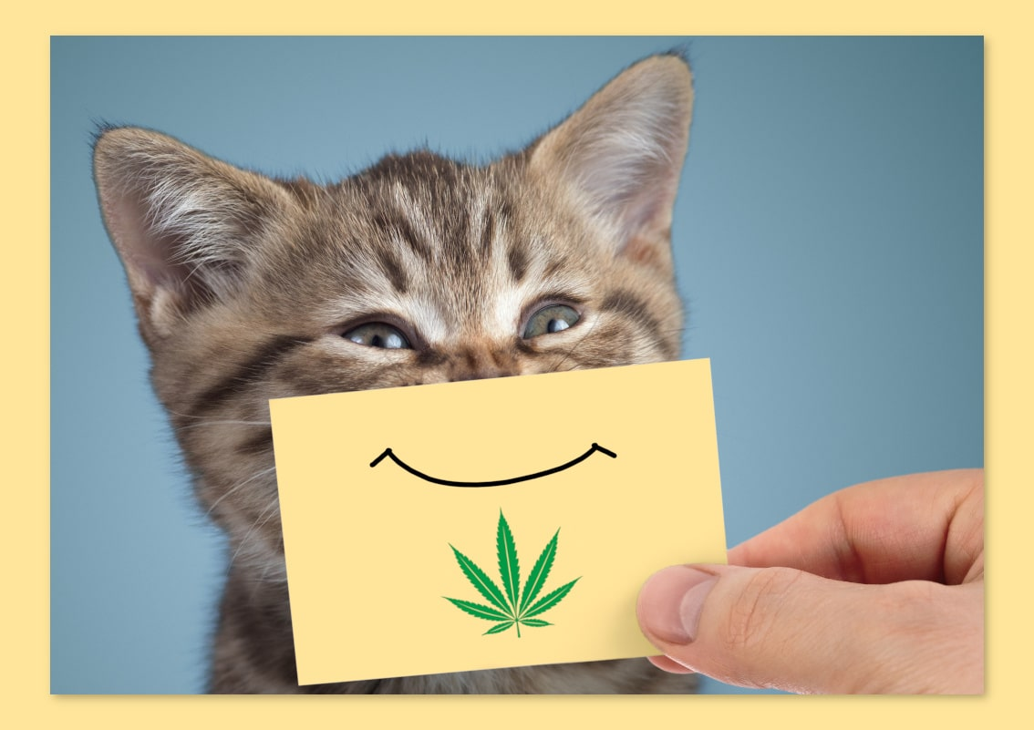 cbd for cats from priceland hemp in black river falls wisconsin