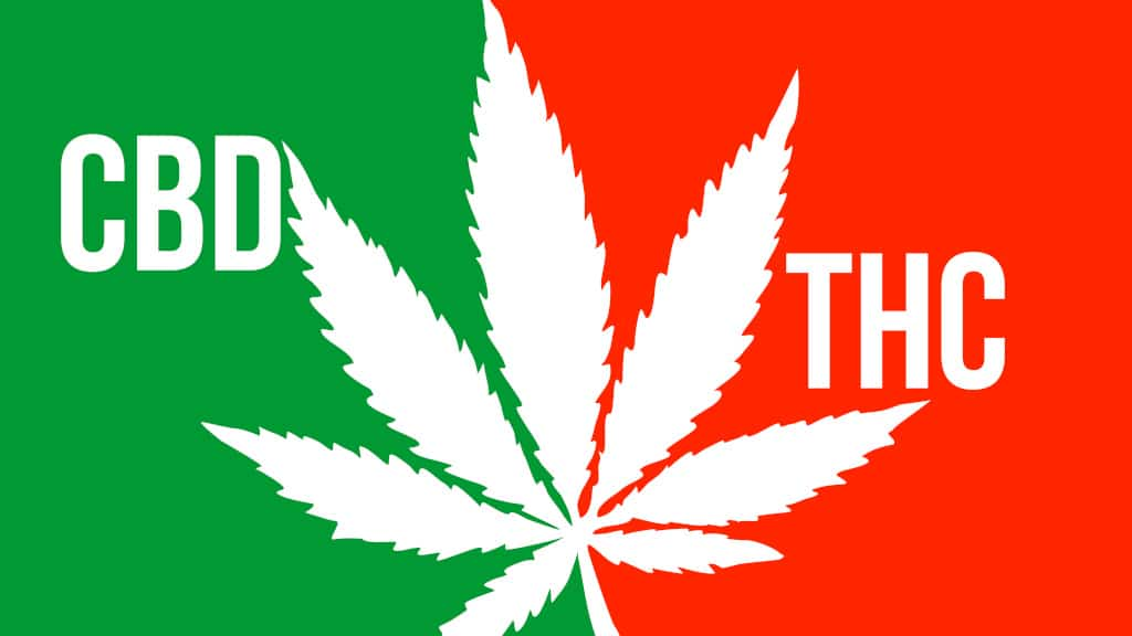 thc vs cbd what is the difference
